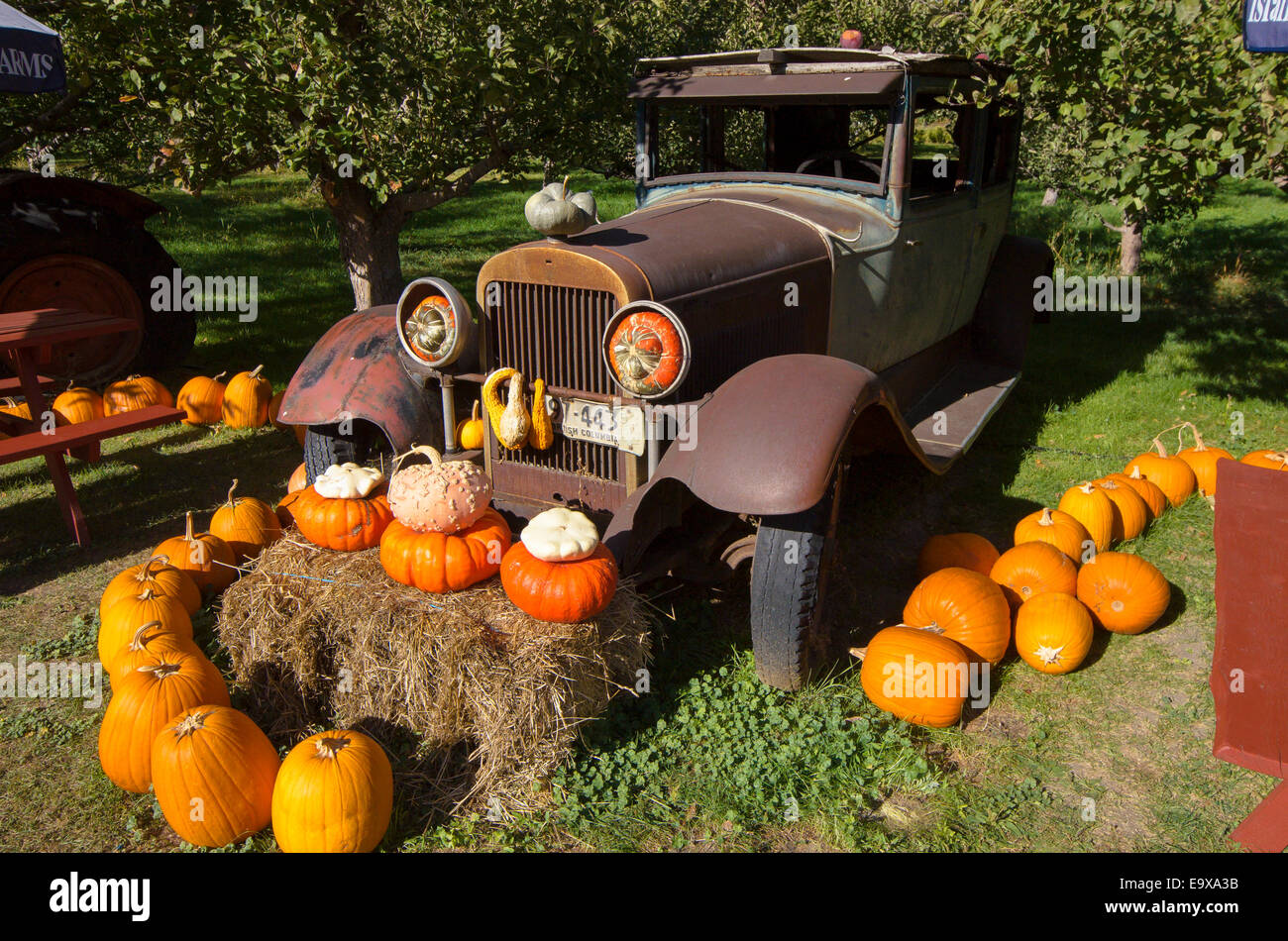 Rusted old jalopy and pumpkin display, Parson's Fruit Stand, Keremeos, Similkameen Region, British Columbia, - Stock Image