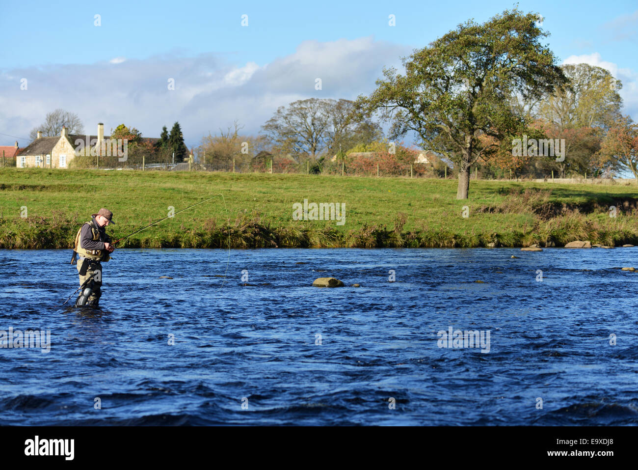 Man fly fishing on the River Tees in County Durham - Stock Image