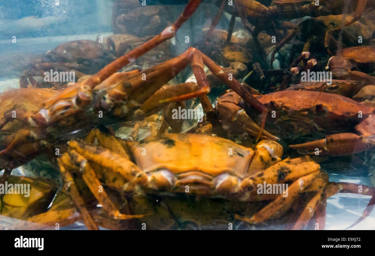 seafood wholesale expo show in Boston MA - Stock Image