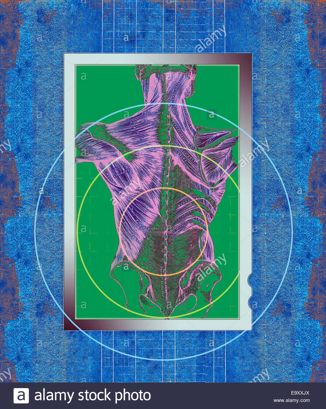 Target over anatomical diagram of human back - Stock Image