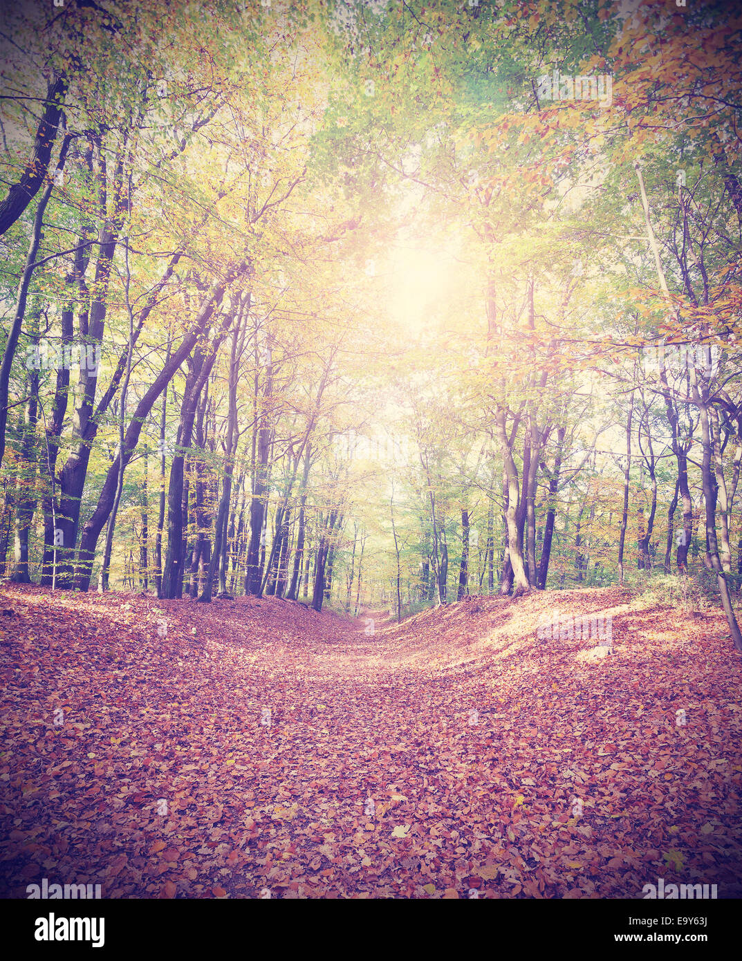 Retro filtered picture of a an autumnal forest. Stock Photo