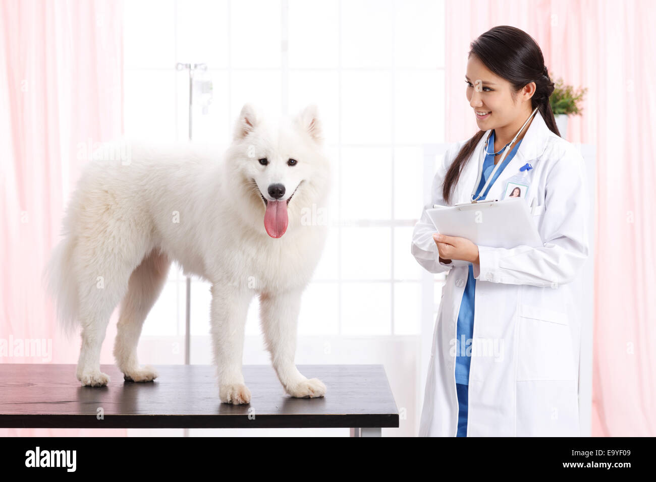 Young female veterinarian with a dog - Stock Image