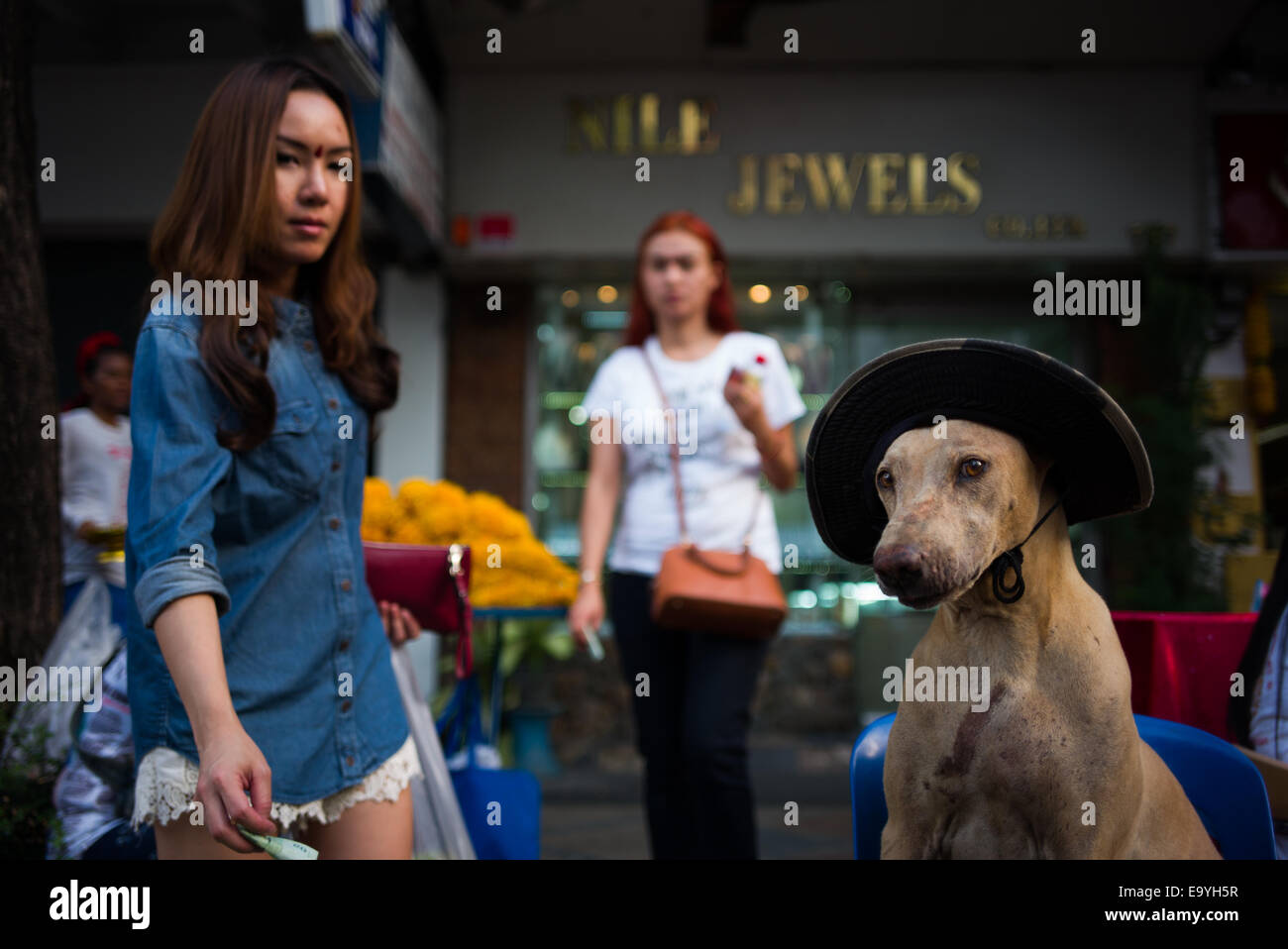 Thai transvestite 'lady-boy' making a donation to old paralyzed dog owner. - Stock Image