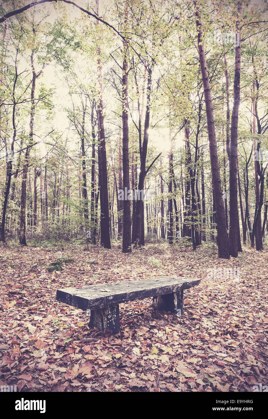 Retro filtered picture of bench in a forest. - Stock Image