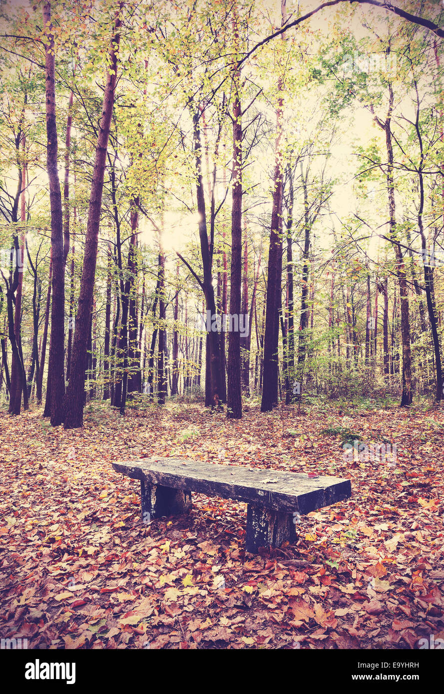 Vintage filtered picture of bench in a forest. - Stock Image