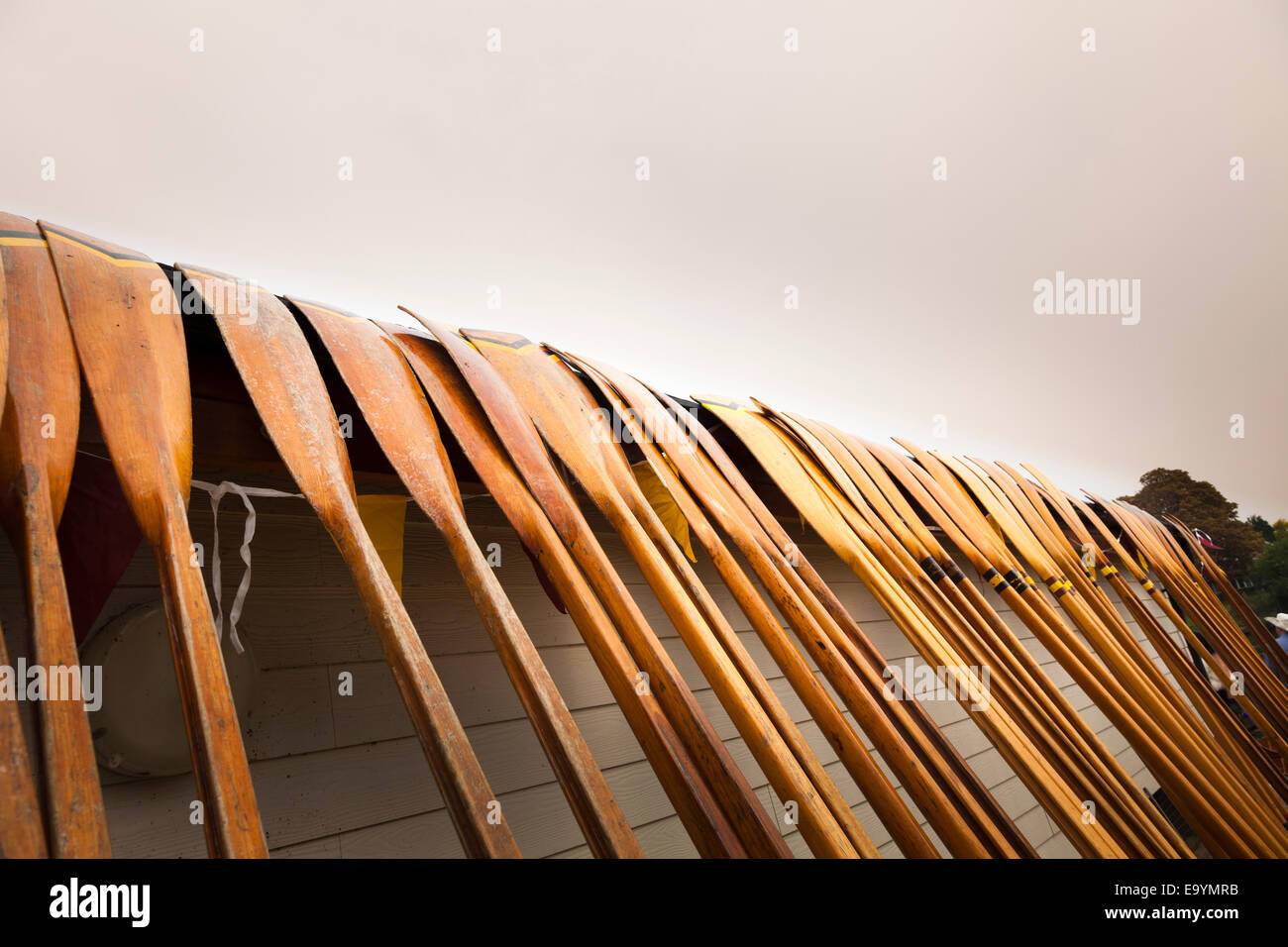 Many oars leaning against the side of the clubhouse Stock Photo