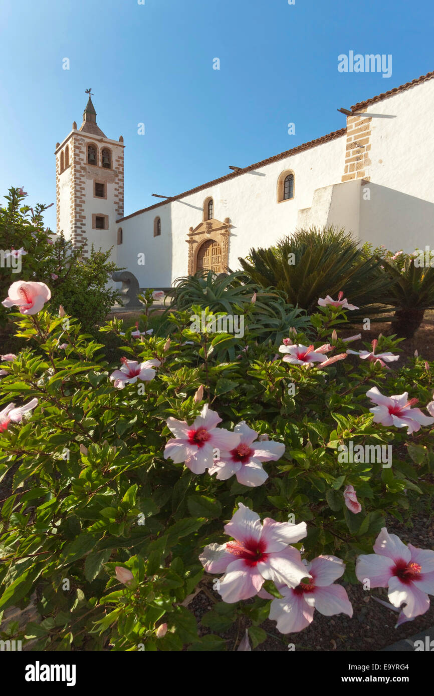 Hibiscus flowers & 17thC Santa Maria Cathedral in this historic former capital; Betancuria, Fuerteventura, Canary - Stock Image