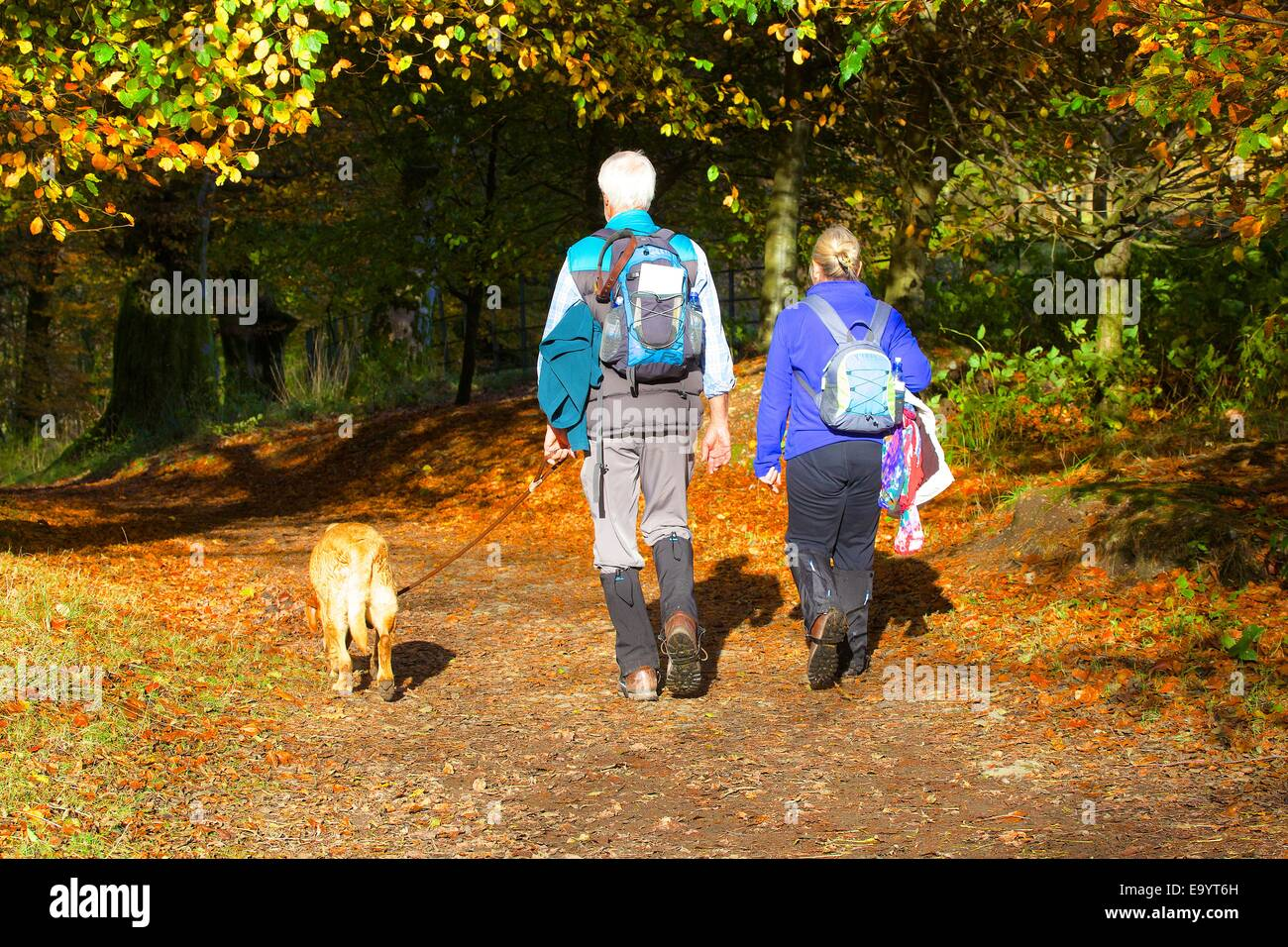 Couple walking in Deer Bolt Woods, Grasmere, The Lake District, Cumbria, England, UK. - Stock Image