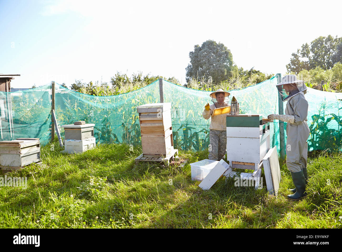 Two female beekeepers working on city allotment - Stock Image
