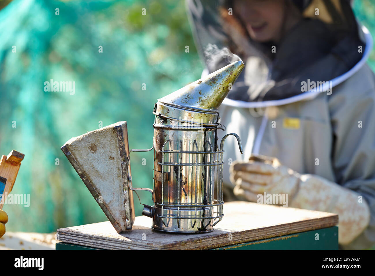 Female beekeeper and bee smoker on city allotment Stock Photo