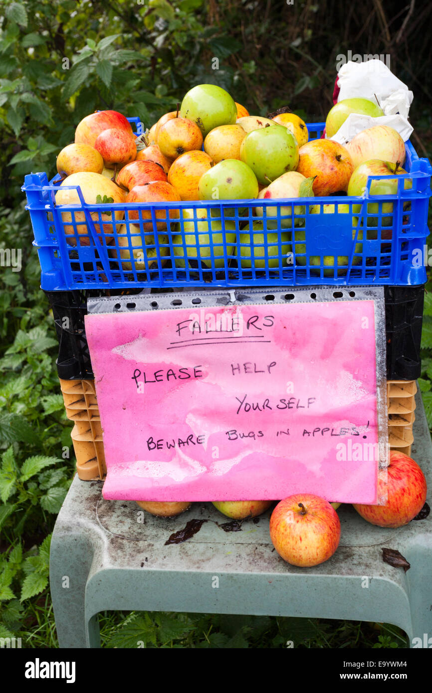 Free windfall apples being given away beside the lane in the village of Rodley, Gloucestershire UK - Stock Image