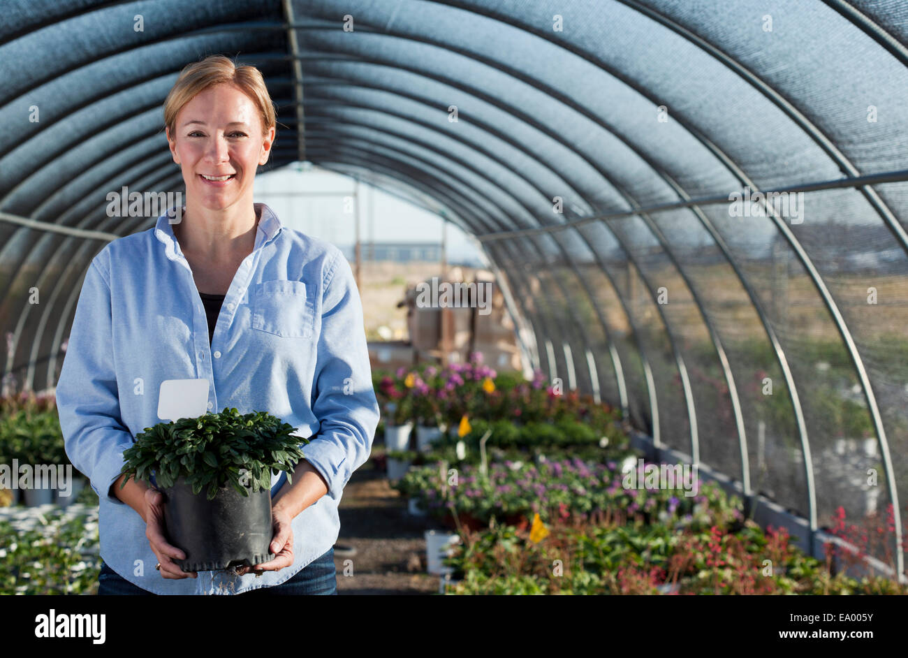 Portrait of mature female worker holding potted plant in plant nursery polytunnel - Stock Image