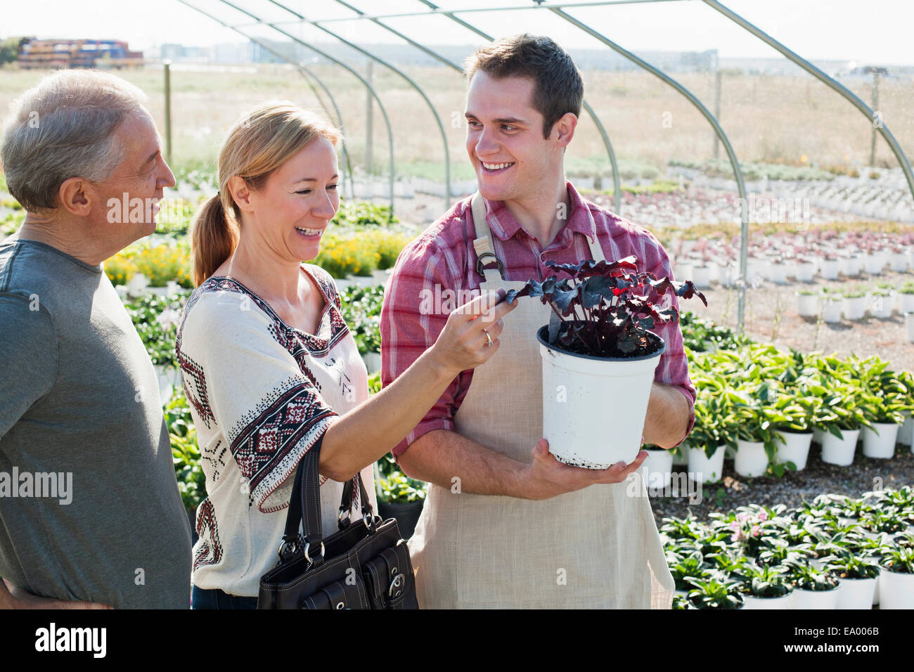 Young male horticulturalist advising customers on potted plant in plant nursery polytunnel - Stock Image