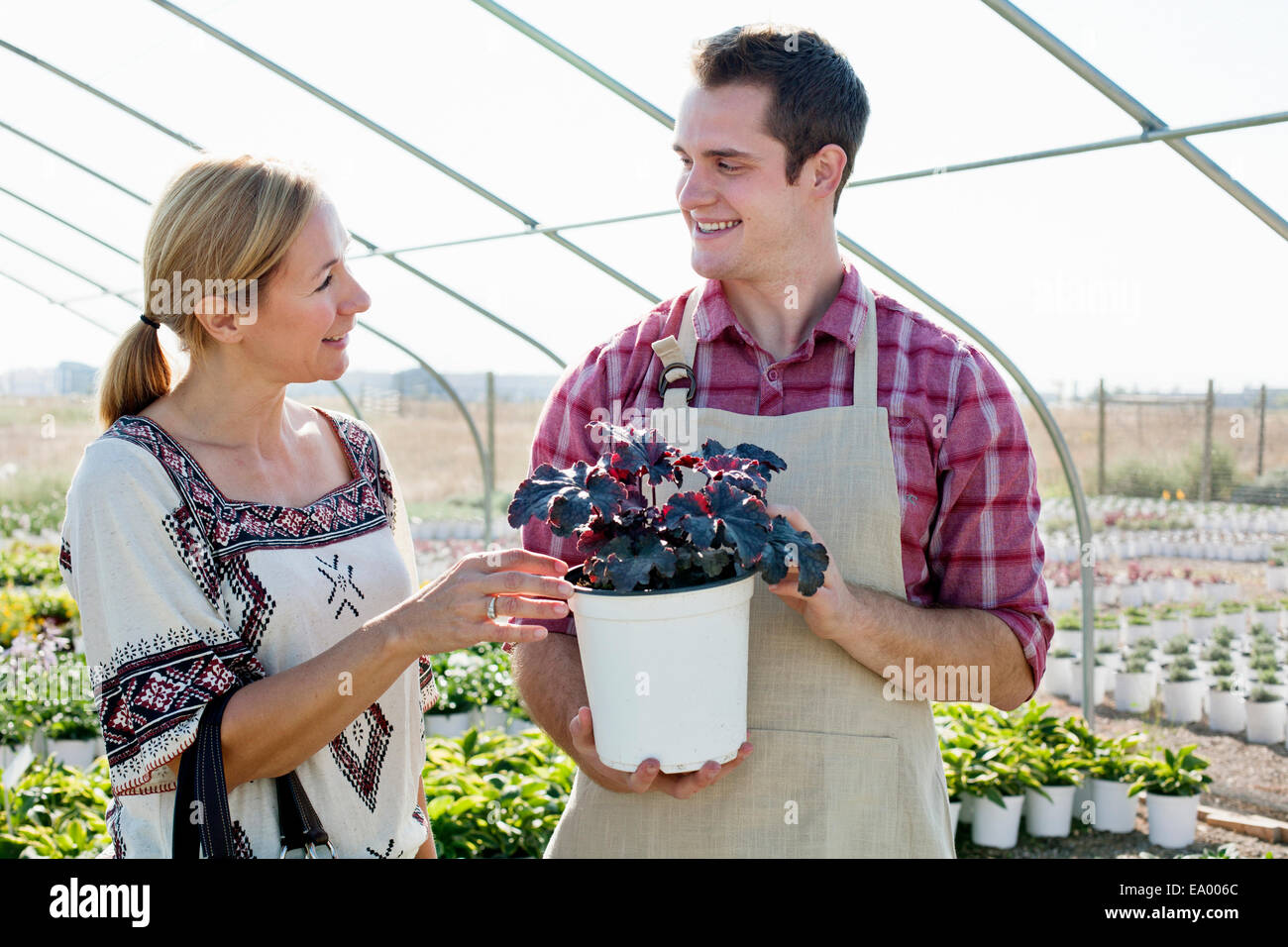 Young male horticulturalist advising female customer on potted plant in plant nursery polytunnel - Stock Image