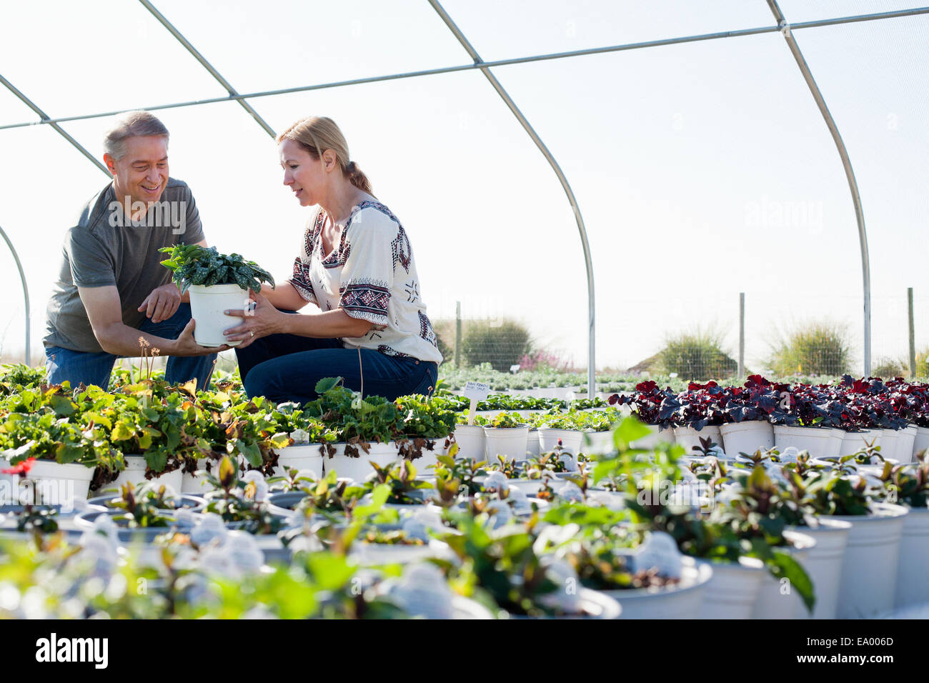 Male horticulturalist advising female customer on potted plant in plant nursery polytunnel - Stock Image