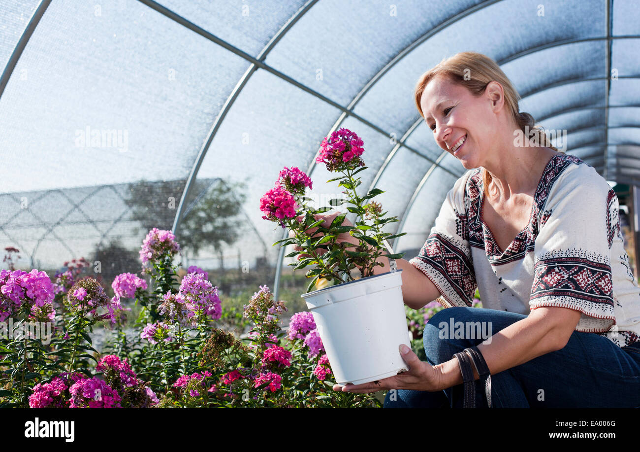 Mature female customer admiring potted plant in plant nursery polytunnel - Stock Image