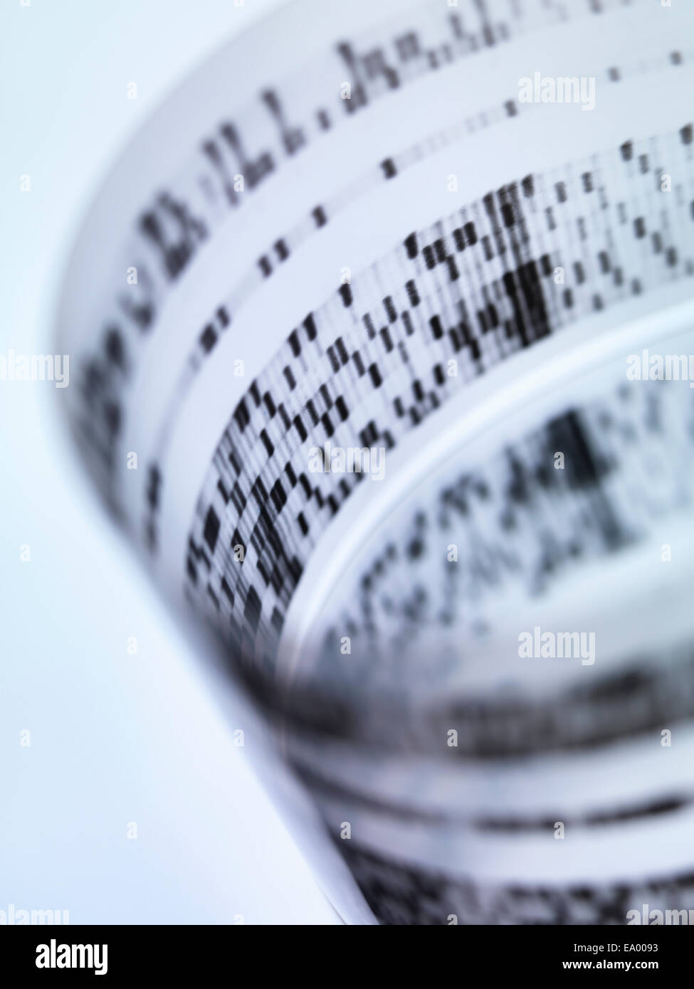 Rolled autoradiograph used in researching genetics - Stock Image