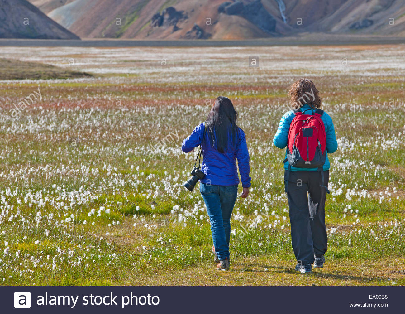 Rear view of two women walking into the cottongrass meadow at Vondugil, Landmannalaugar, Fjallabak, Iceland - Stock Image