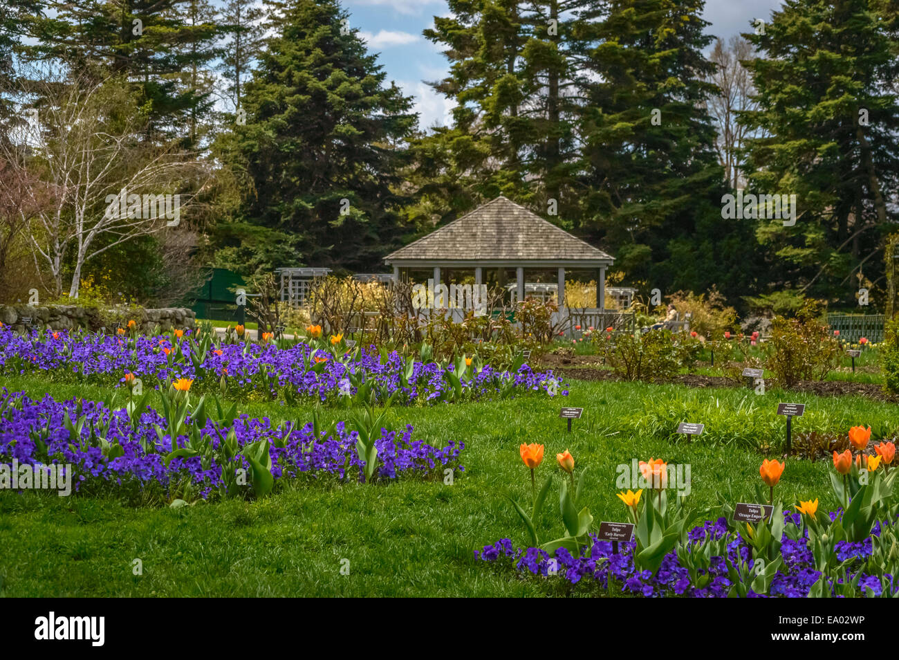 tulip garden with a Folly, evergreen trees and sky - Stock Image
