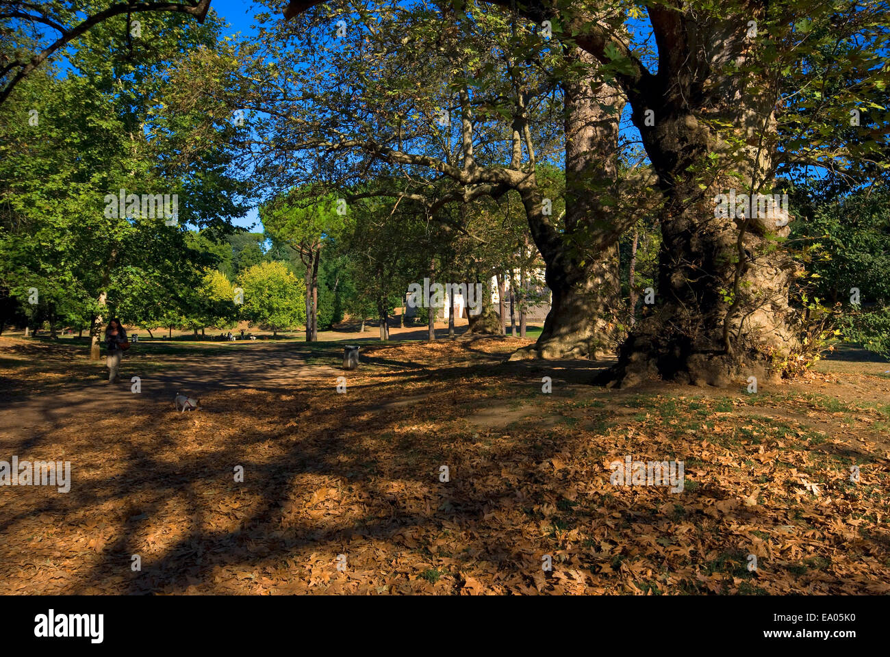 Trees in Villa Borghese Park, Rome, Italy - Stock Image