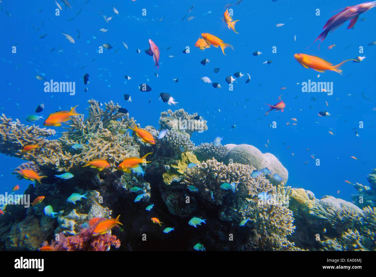 Sea life around Coral reef - Stock Image