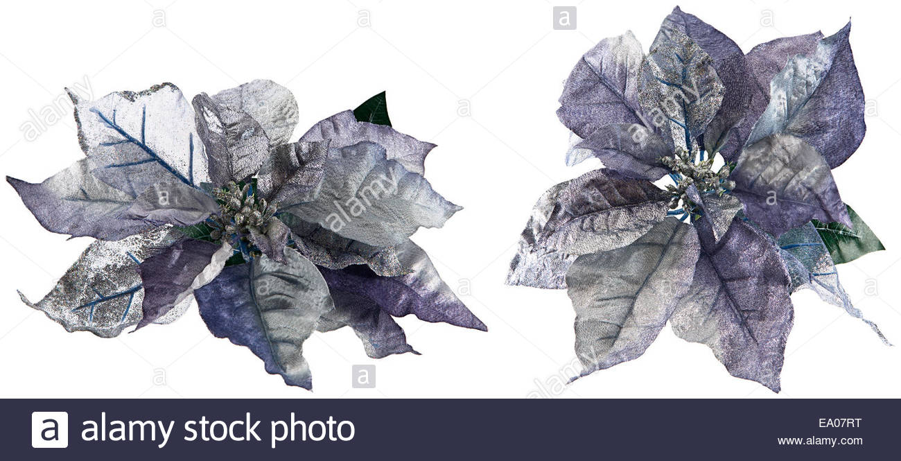 Isolated on white two blue silver glitter covered silk flowers isolated on white two blue silver glitter covered silk flowers imitation poinsettia floral as christmas design element mightylinksfo