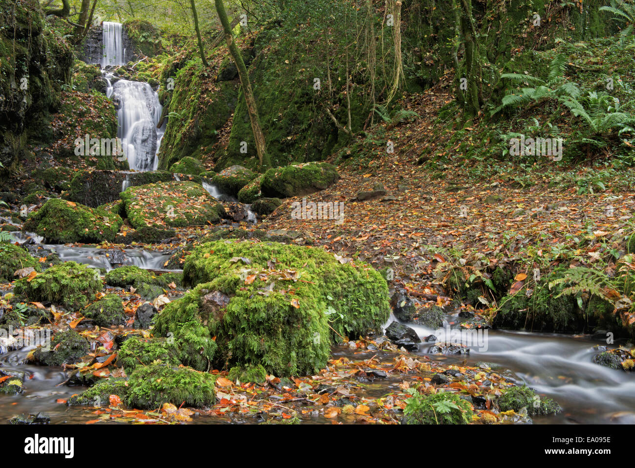 Clampitt Falls part of the Canonteign Falls Waterfall system in autumn near Chudleigh, Dartmoor National Park,  - Stock Image