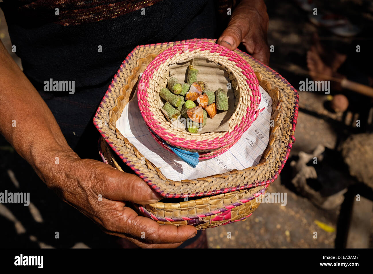 A woman shows betel and Areca (sirih and pinang) which to be served for visitors in Lamagute village, Lembata, Indonesia. - Stock Image