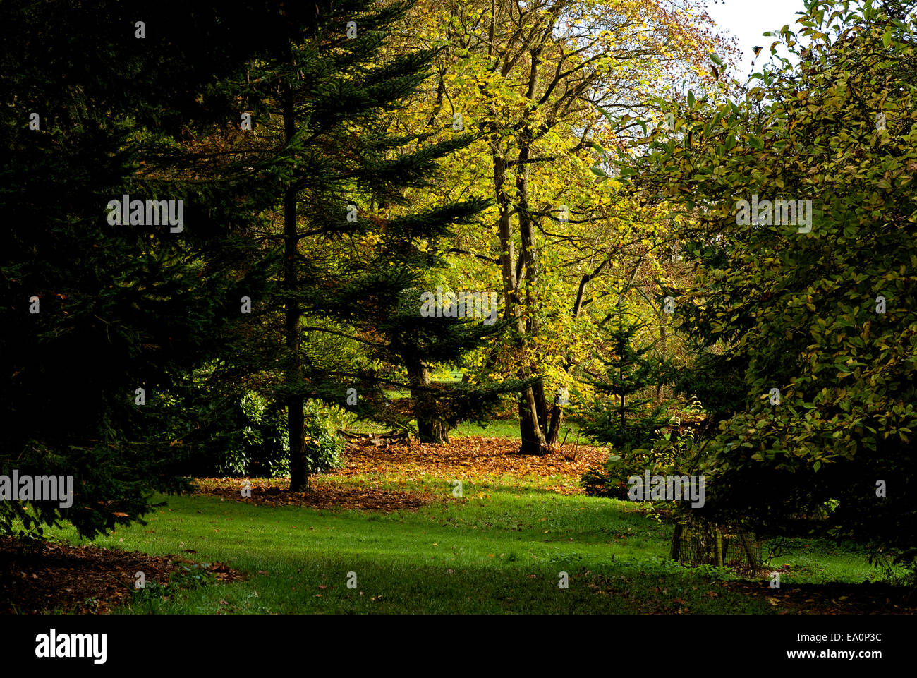 Batsford Arboretum, near Moreton-in-the-Marsh, Gloucestershire, England UK Stock Photo