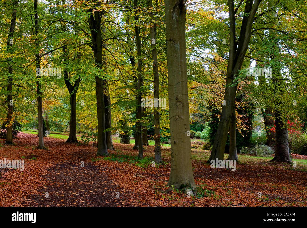 Batsford Arboretum, near Moreton-in-the-Marsh, Gloucestershire, England UK - Stock Image