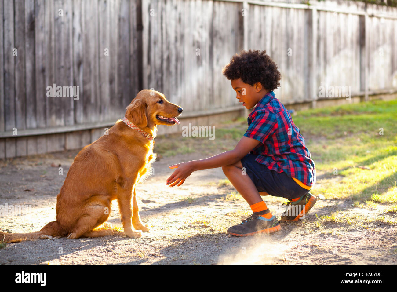 Boy training dog to give paw in garden - Stock Image