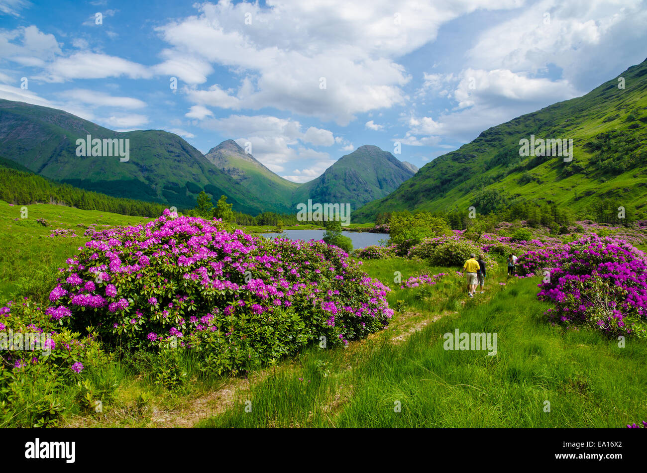 Walking in the Scottish highlands - Stock Image