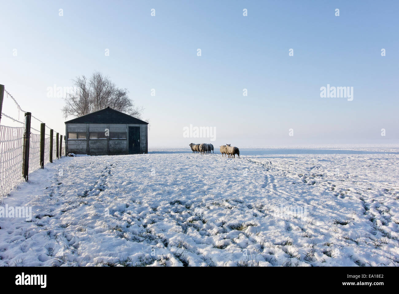 A Cold Winter Morning In Netherlands Stock Photo 75016650 Alamy