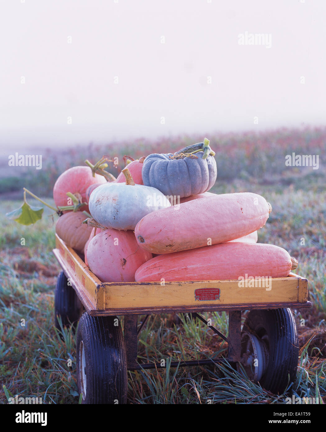 pumpkins and gourds in wagon Stock Photo