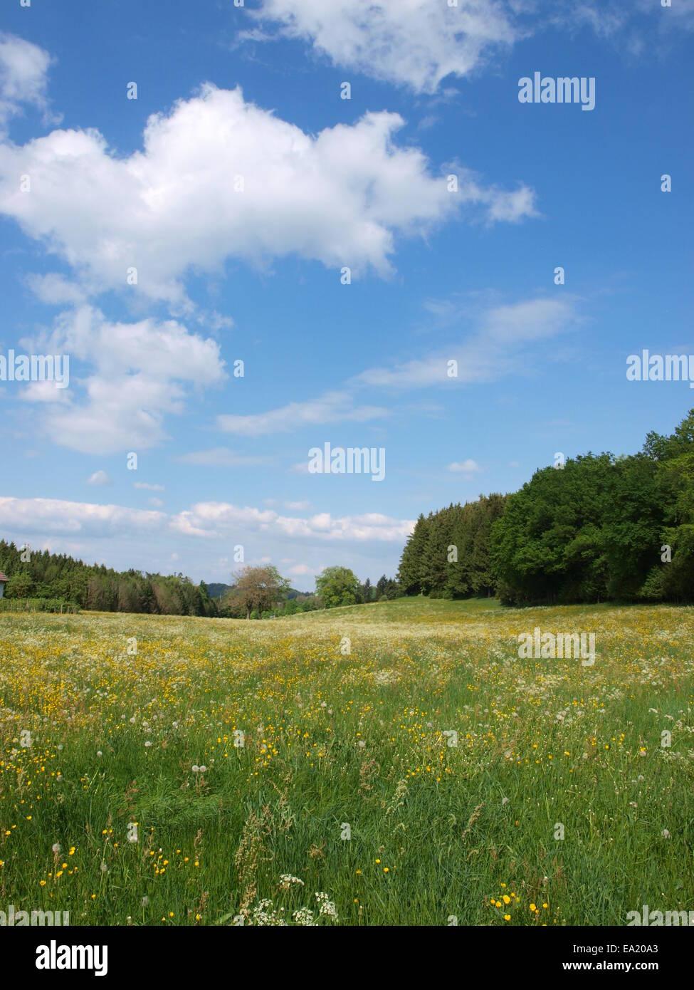 Flower Meadow - Upper Swabia, Germany Stock Photo
