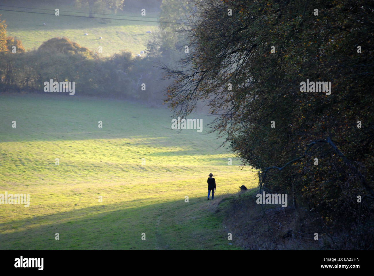 Dog walker in the Chiltern Hills - Stock Image