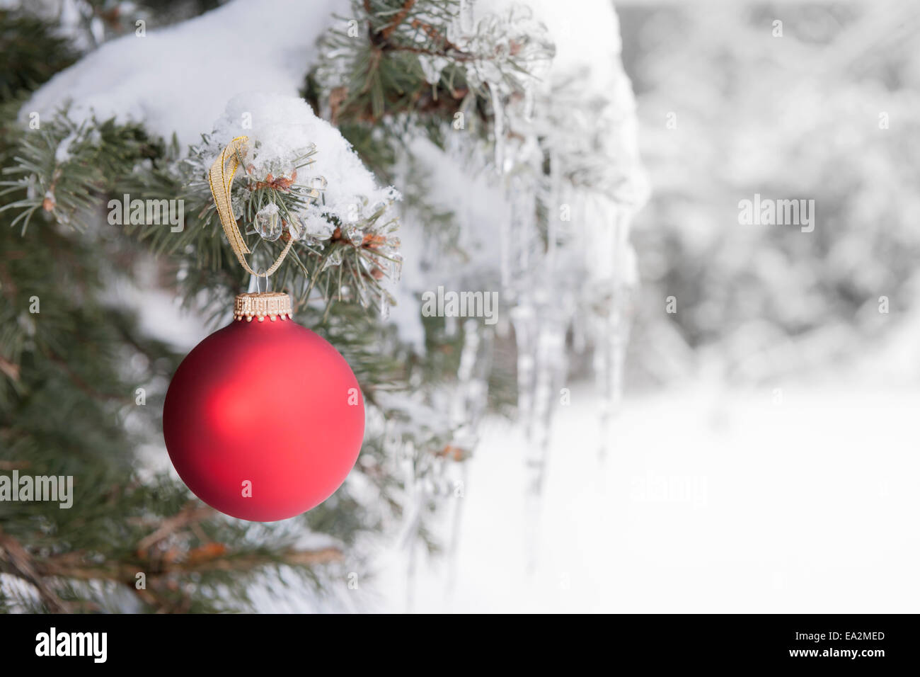 Red Christmas Ornament Hanging On Snow Covered Spruce Tree