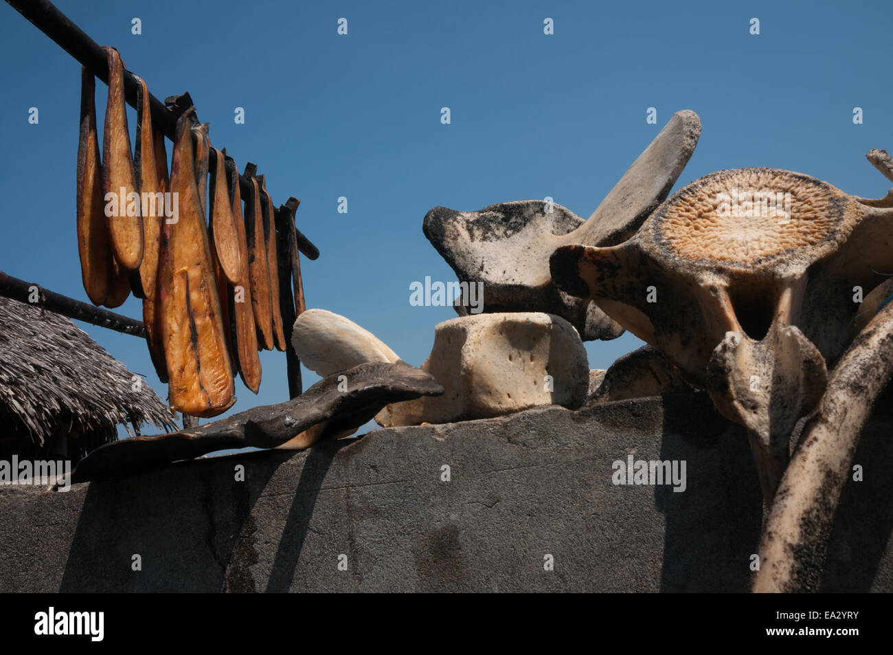 Whale meats and bones dried up under the sun, a regular view at Lamalera village, Lembata Island, Indonesia. - Stock Image