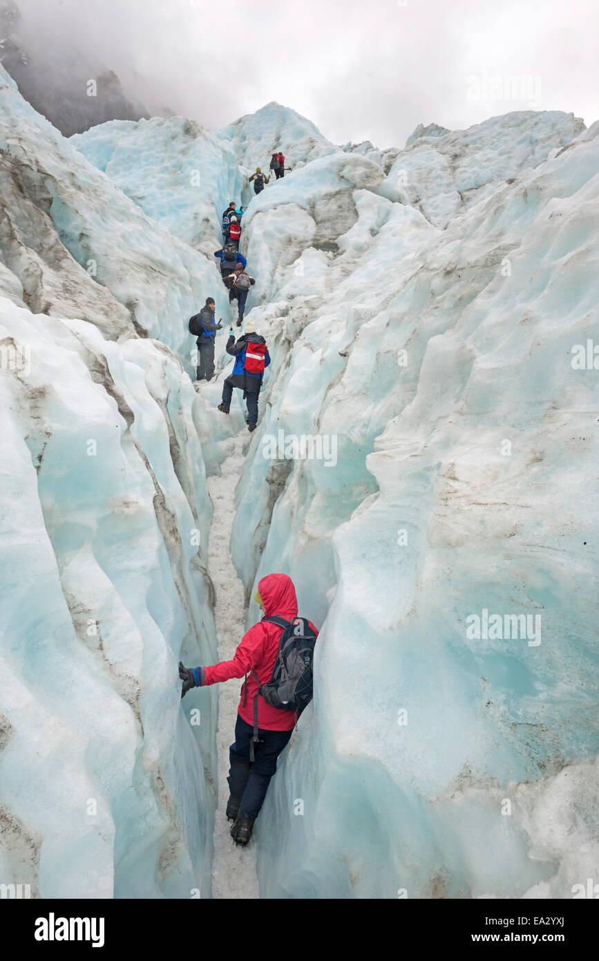 Mountaineers on glacier, Fox Glacier, South Island, New Zealand, Pacific - Stock Image
