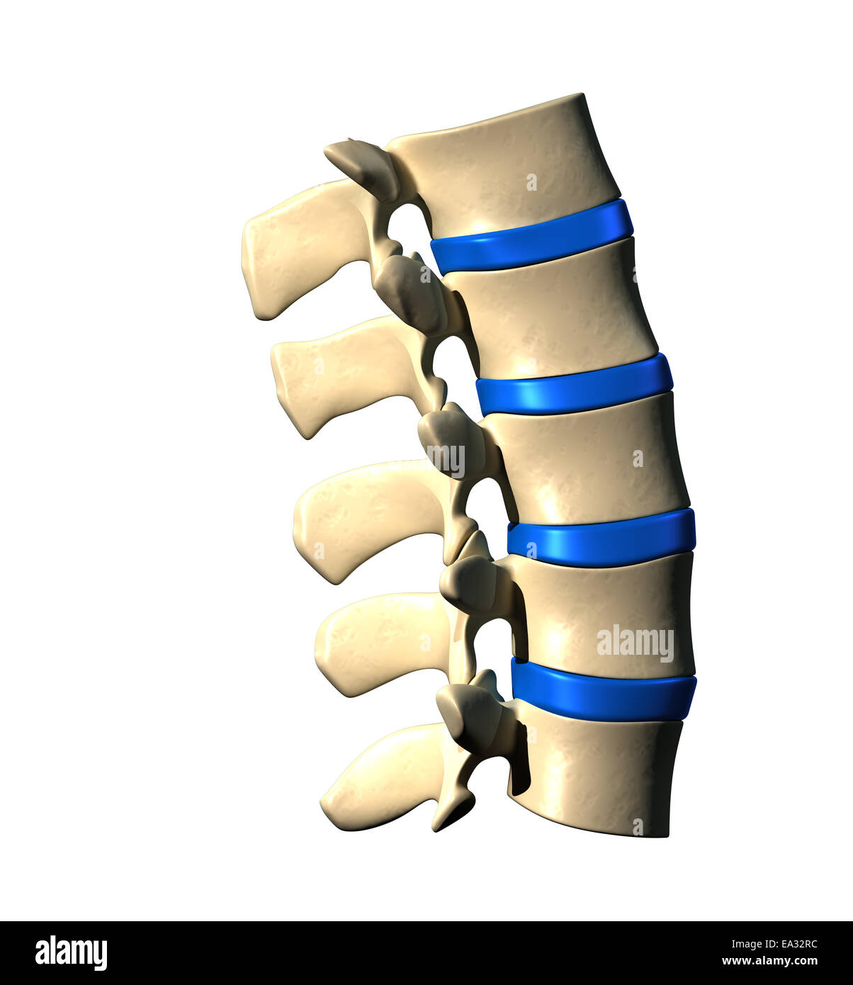 Lumbar Spine - Lateral view / Side view - Stock Image