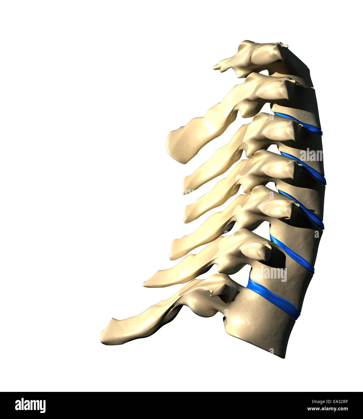 Cervical Spine Lateral View Side View Stock Photo 75056115 Alamy