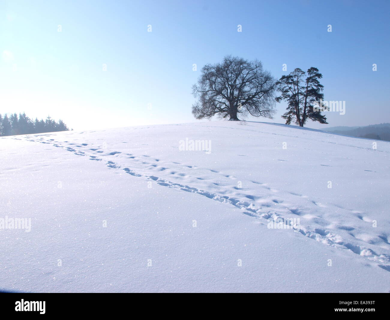 Tracks in the snow in Upper Swabia, Germany - Stock Image