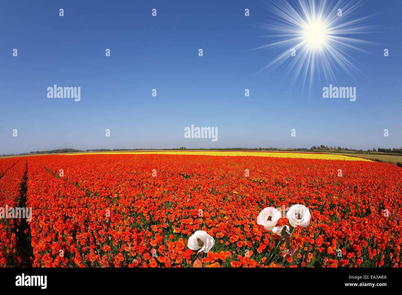 Toy bright sun shines - Stock Image