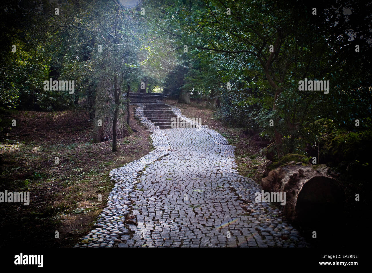 Ghostly, ethereal light shining through from the JFK Memorial Stone onto a granite sett path within woodland, at - Stock Image