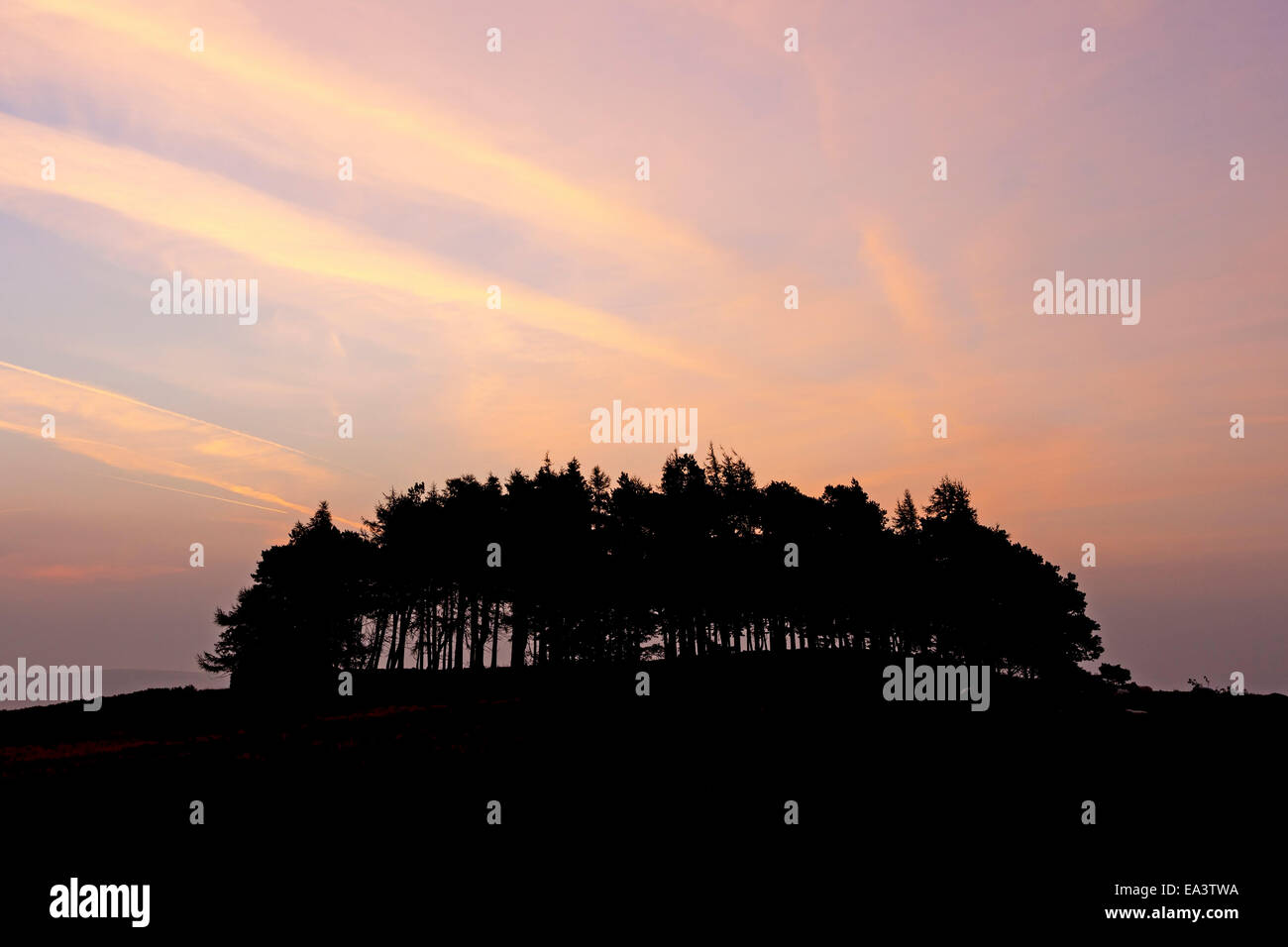 Trees on the Kirkcarrion Burial Mound Silhouetted Against a Pre Dawn Sky Lunedale, Teesdale County Durham UK Stock Photo