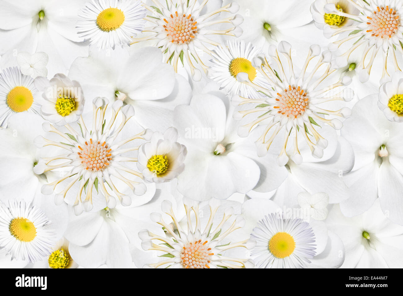 white flowers - Stock Image