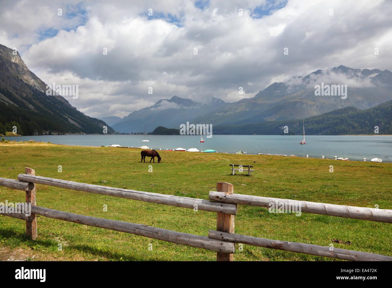 Sleek bay horse - Stock Image