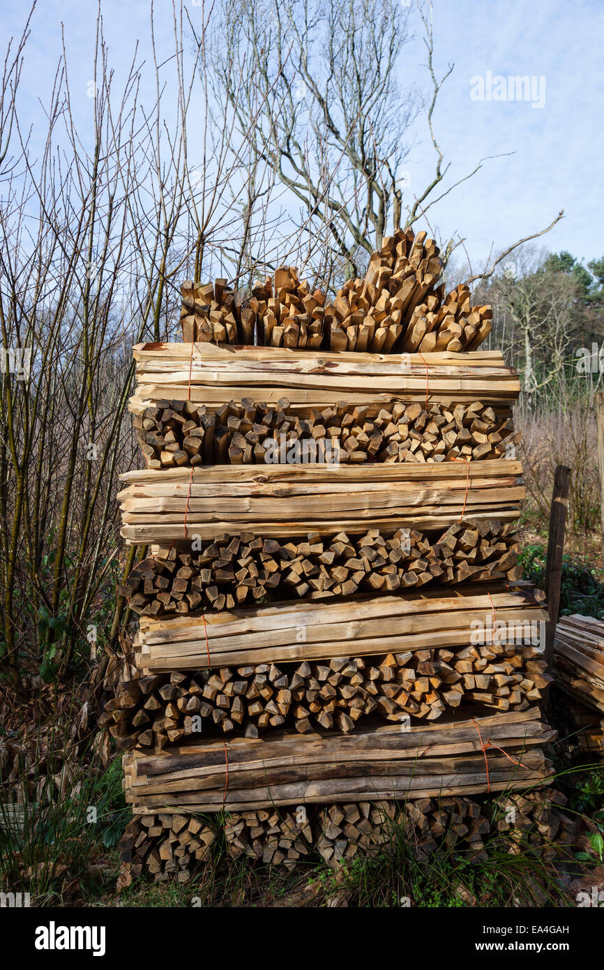 Chestnut fence palings stacked up in a woodland clearing prior to collection. Stock Photo