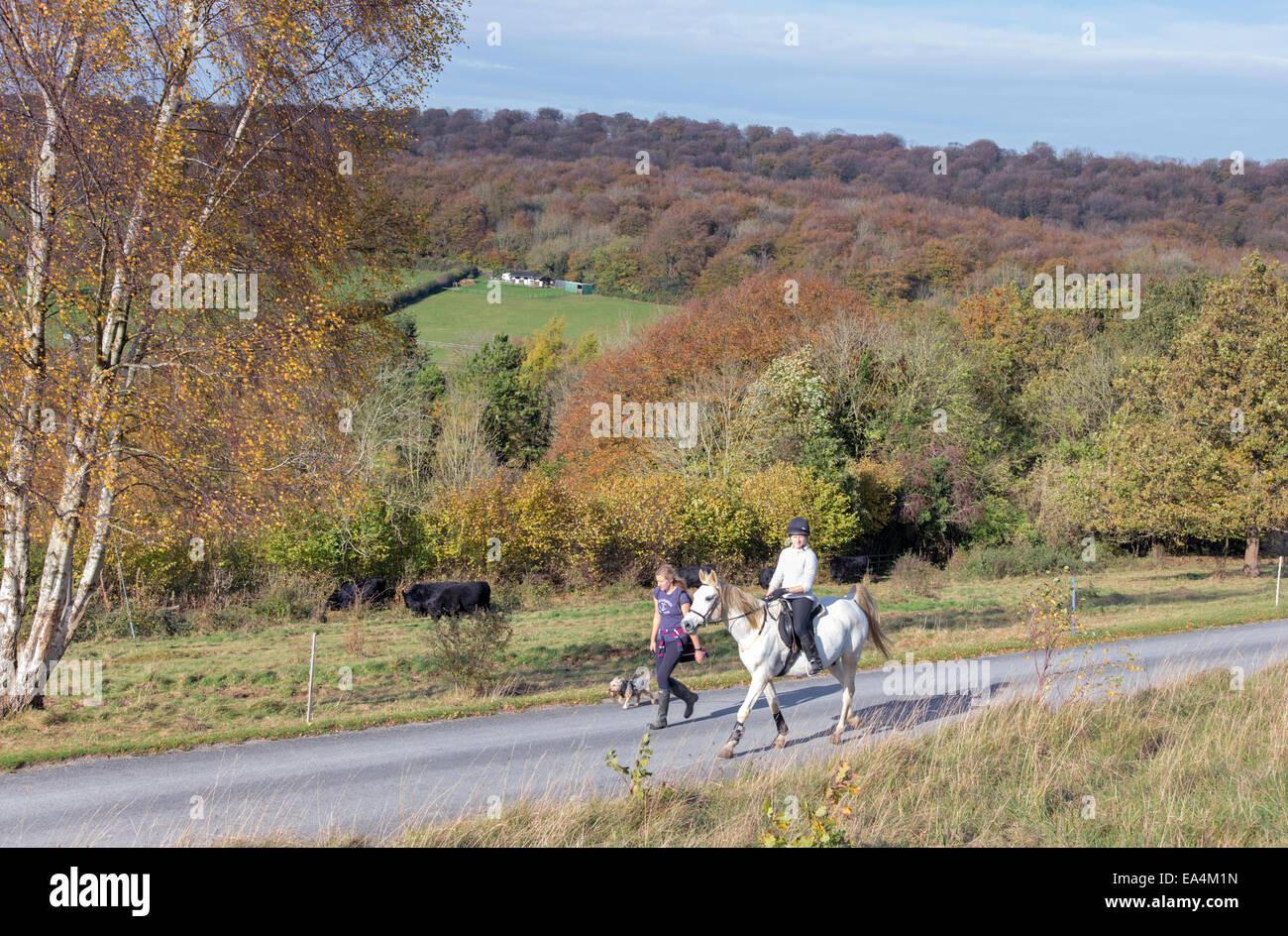 Autumn on Cranham Common part of Gloucestershire National Nature Reserves, Cranham, Gloucestershire, England, UK - Stock Image
