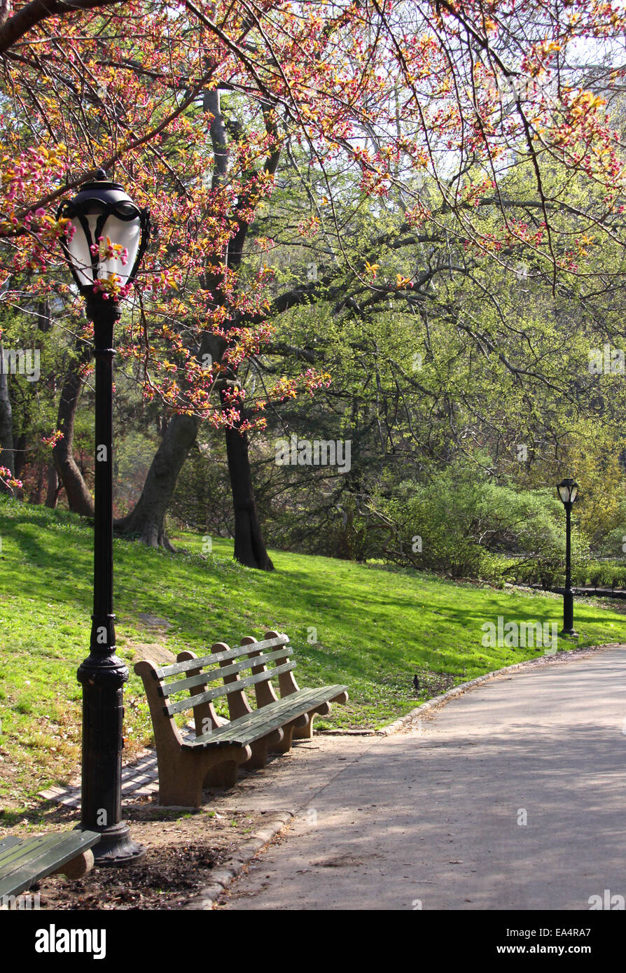 Spring Blossoming Tree And Bench In Central Park New York City